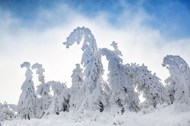 Schöne winterlandschaft und bäume, die sich vom schneedruck biegen