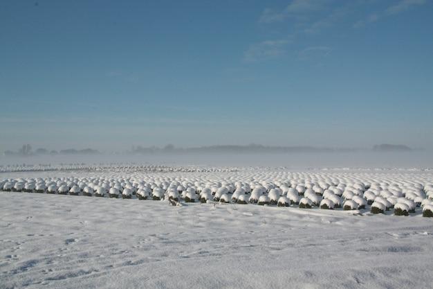 Schöne winterlandschaftsansicht mit schneebedeckten strauchreihen in brabant, niederlande