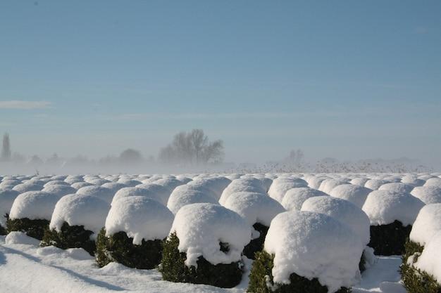 Schöne winterlandschaftsansicht mit strauchreihen bedeckt mit schnee in brabant, niederlande