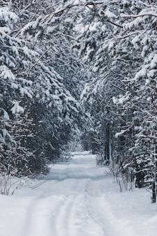 Schöne winterstraße im wald