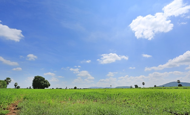 Schöne wolke auf blauem himmel auf dem grünen gebiet und dem baum. landschaftssommer-szenenhintergrund.