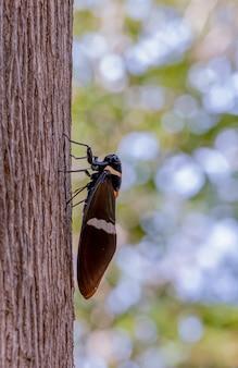 Schöne zikade auf dem baum mit unscharfem hintergrund