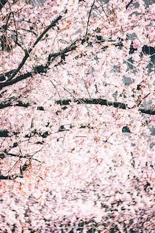 Schöne zweige mit kirschblütenblüten gegen den hellen himmel