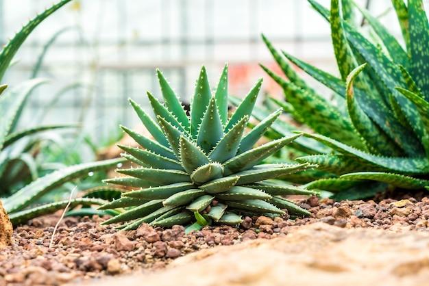 Schönen kaktus in zimmerpflanze