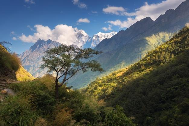 Schöner alleiniger baum gegen erstaunliche himalaya-berge mit schneebedeckten gipfeln