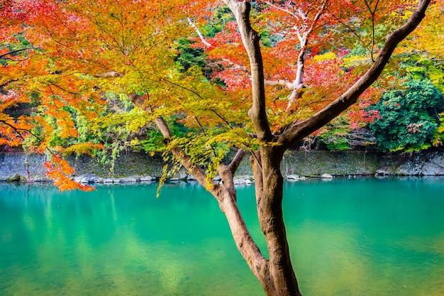 Schöner arashiyama-fluss mit ahornblattbaum und -boot um see