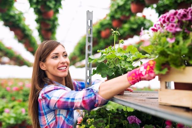 Schöner attraktiver frauenflorist, der blumen im gewächshausgarten kümmert