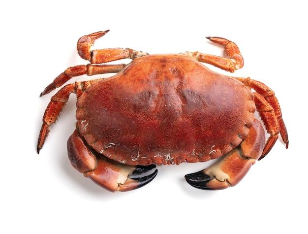 Schöner ausgeschnittener krabbenkuchen auf einem weißen hintergrund
