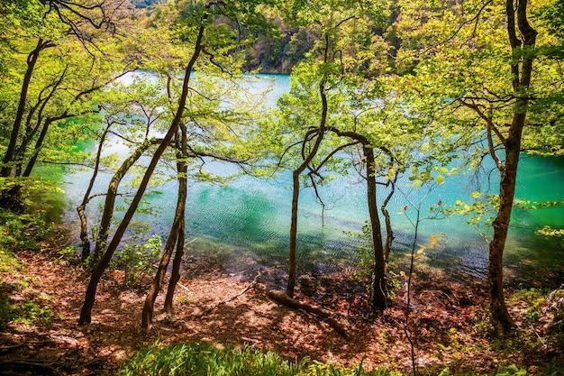Schöner azurblauer see durch die bäume im plitvicer nationalpark, kroatien
