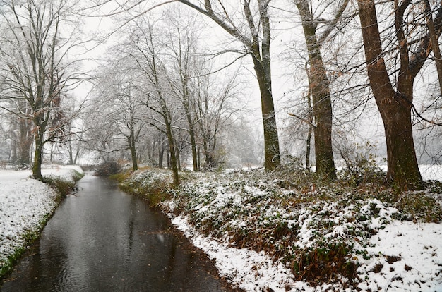 Schöner bach, der durch das schneebedeckte grasufer und die bäume geht