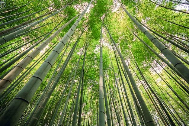 Schöner bambuswald an touristischem bezirk arashiyama, kyoto, japan