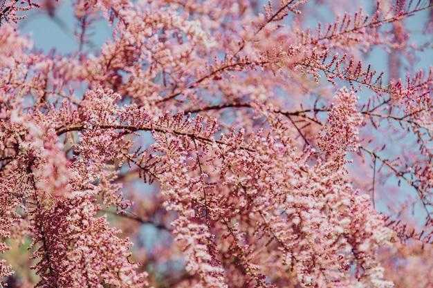 Schöner baum mit kleinen rosa blumen auf ihm an einem sonnigen tag
