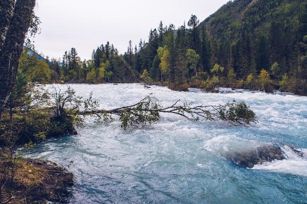 Schöner berg fließender fluss. blauer fluss kucherla im nationalpark belukha, altai-gebirge, sibirien, russland