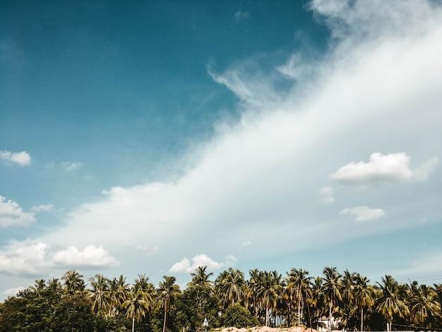 Schöner bewölkter himmel mit exotischen bäumen