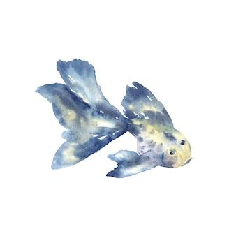 Schöner blauer fisch mit großer flosse. hand gezeichnete aquarellillustration. isoliert.