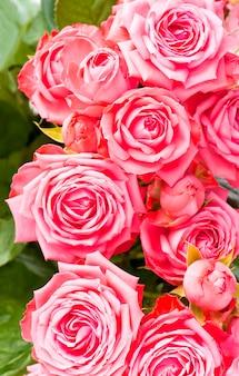 Schöner blumenblumenhintergrund