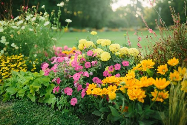 Schöner blumengarten mit blühenden astern und verschiedenen blumen im sonnenlicht