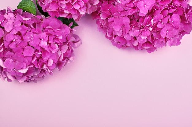 Schöner blumenhintergrund und grünblätter, beschaffenheit, tapete. flat-laypink-hortensie auf rosengrund,