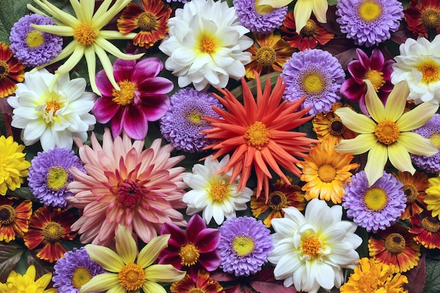 Schöner blumenhintergrund von herbstgartenblumen
