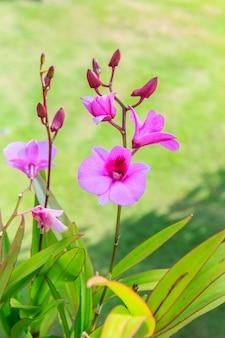 Schöner blumenstrauß aus lila orchideen