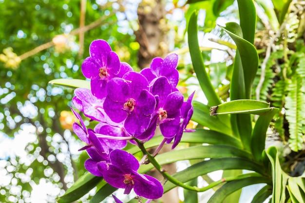 Schöner blumenstrauß aus lila