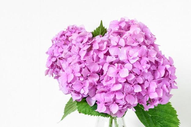 Schöner blumenstrauß der rosa hortensienblumen mit wassertropfen.