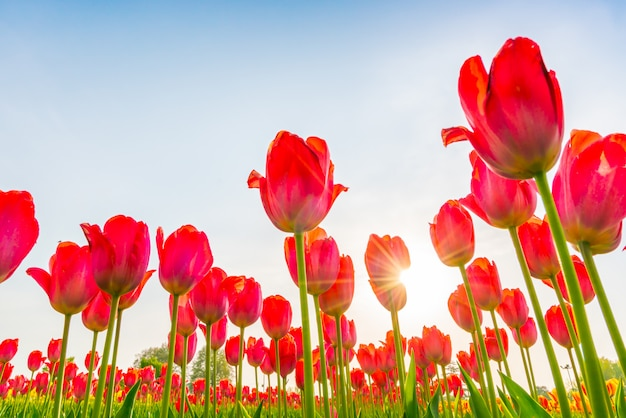 Schöner blumenstrauß der saison der tulpen im frühjahr.