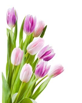 Schöner blumenstrauß der tulpenblume lokalisiert auf einer weißen wand