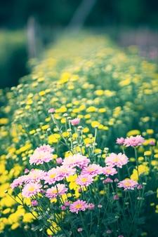 Schöner blumenstrauß von chrysanthemenblumen