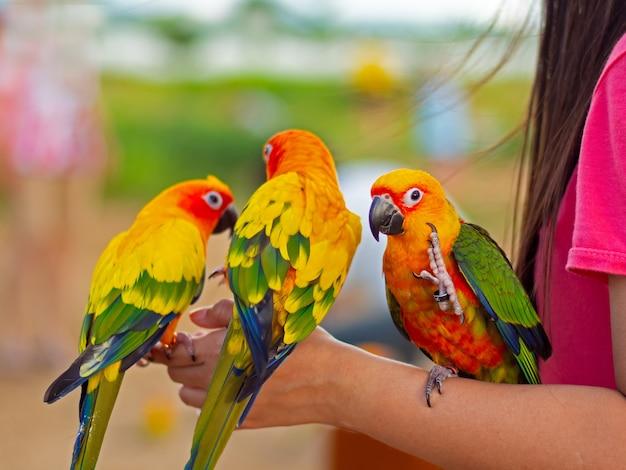 Schöner bunter papagei, der auf menschlichem finger sitzt.