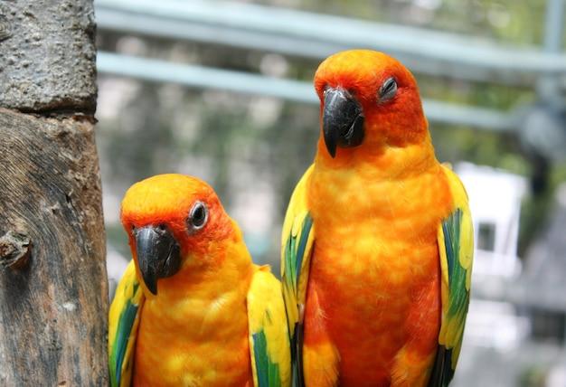 Schöner bunter papageienvogel