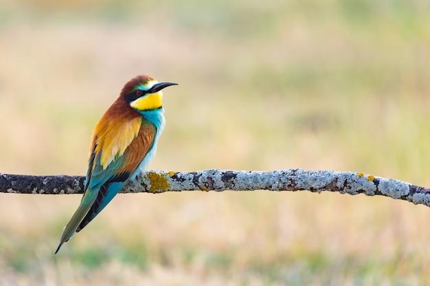 Schöner bunter vogel thront auf einem zweig
