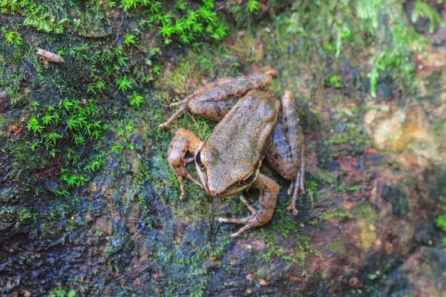 Schöner dunkler frosch im wald