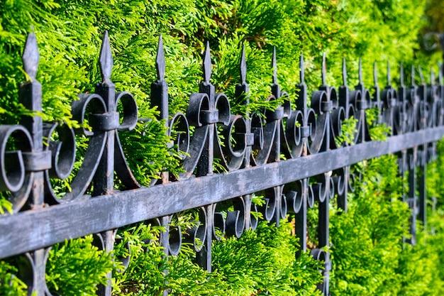 Schöner durchbrochener metallzaun nahe der grünen thuyawand