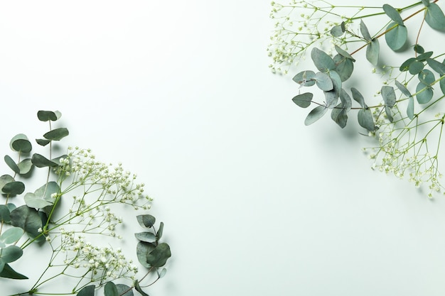 Schöner eukalyptus und gypsophila lokalisiert auf weiß