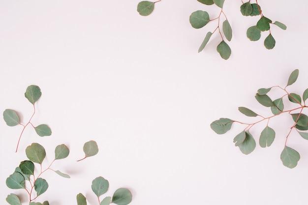 Schöner eukalyptuszweigrahmen auf blassem pastellrosa hintergrund. flache lage, ansicht von oben