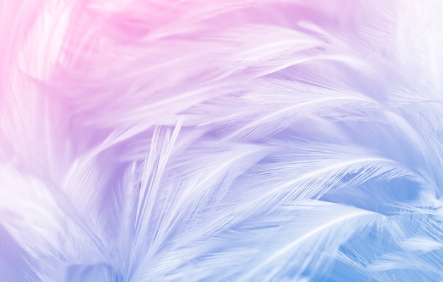 Schöner farbverlauf der blauen federn