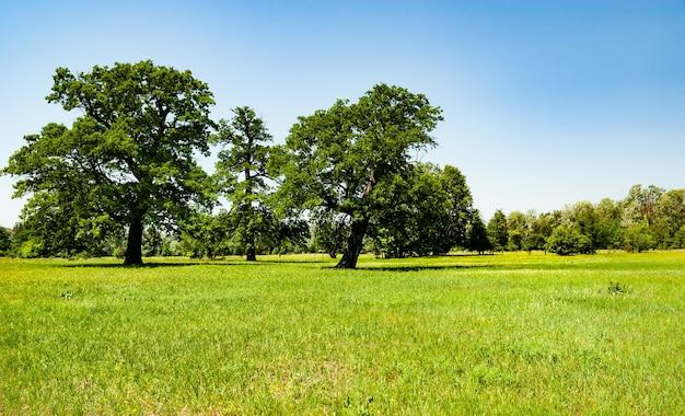 Schöner flauschiger blühender baum wächst im feld vor dem hintergrund des waldes und des blauen himmels an einem sonnigen warmen frühlingstag.