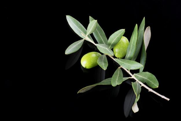 Schöner frischer reifer grüner ölzweig oben lokalisiert auf schwarzem, abschluss, puglia, italien