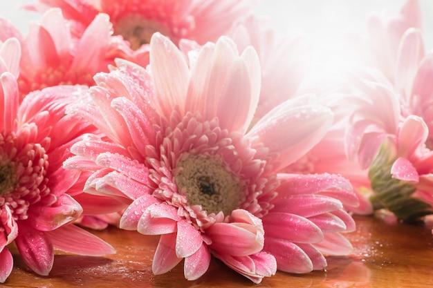 Schöner gerberablumen-jagdnaßregen lag auf dem bretterboden.