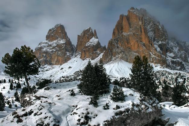 Schöner geschossener berg und bäume des sellajoch-plans in italien