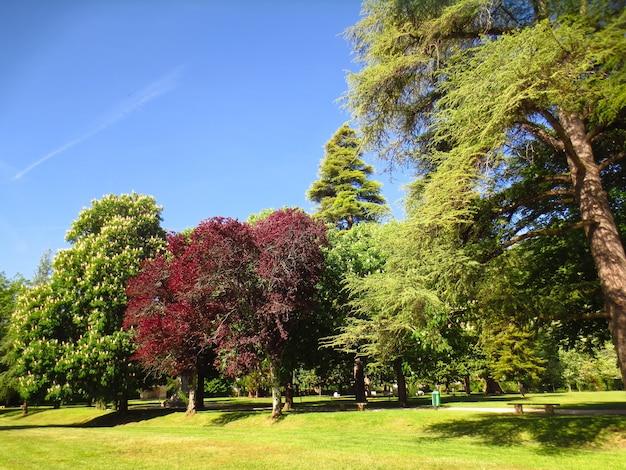 Schöner gewöhnlicher sonniger tag in einem park voller bäume