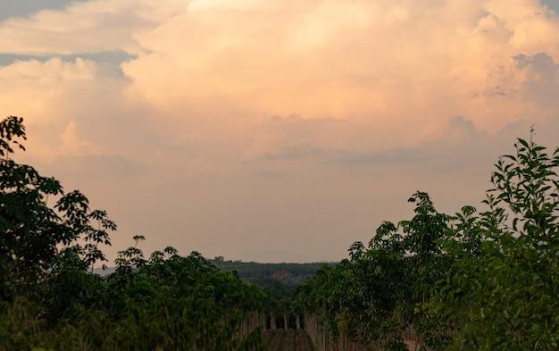 Schöner goldener bewölkter himmel im abendsonnenuntergang gegen baumlandschaft