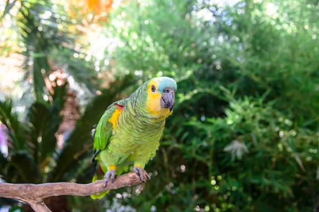 Schöner grüner amazonas-papagei unter grünen niederlassungen von palmen