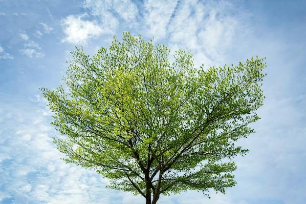 Schöner grüner baum auf klarem blauem himmel im tageslicht