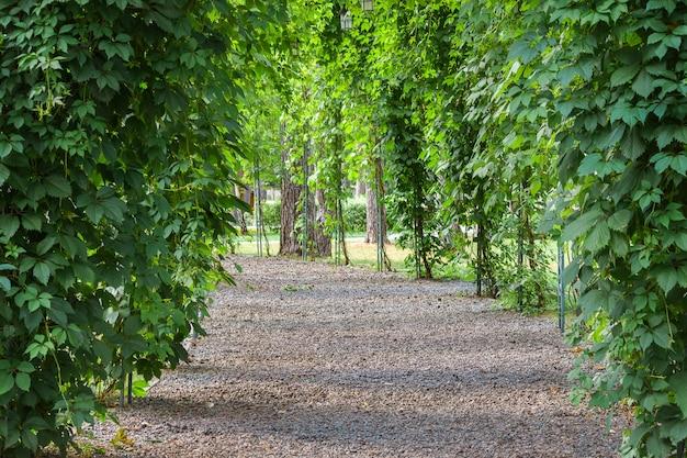 Schöner grüner bogen, koridor, mit antiken lampen. entspannen sie sich, partykonzept.