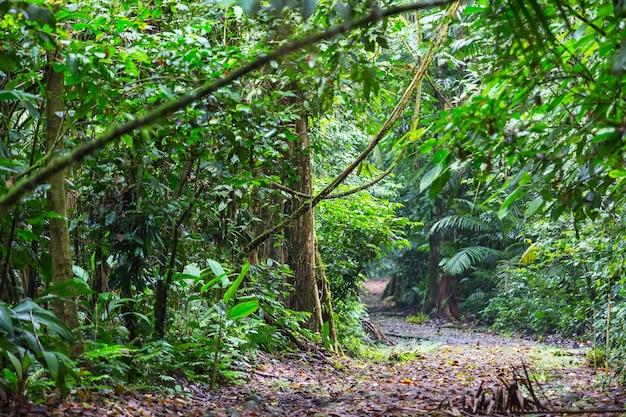Schöner grüner tropischer dschungel