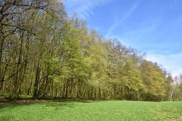 Schöner grüner wald des panoramas im frühjahr.