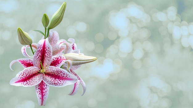 Schöner haufen bunter tiger lily blumen auf grünem unscharfen hintergrund. festliches blumenkonzept. blumenkarte mit blumen, kopienraum.