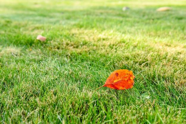 Schöner hellgrüner rasen im herbstpark. spaziergänge im herbst